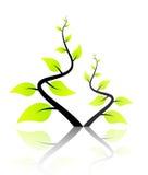 Lokalisiertes grünes Baum-Frühjahr Stockbilder
