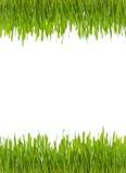 Lokalisiertes grünes frisches Gras mit Wasser fällt auf weißen Hintergrund - von der Spitze und von der Unterseite Stockfoto