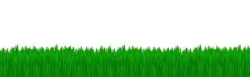 Lokalisiertes grünes Gras lizenzfreie abbildung