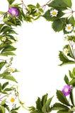 Lokalisiertes grünes Laub und Blumen lizenzfreie stockbilder