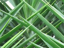 Lokalisiertes Makro des grünen Palmwedels durchbohrt Muster lizenzfreies stockfoto