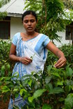 Lokalna kobieta pracuje w herbacianej fabryce Rambukkana Sri Lanka obraz stock