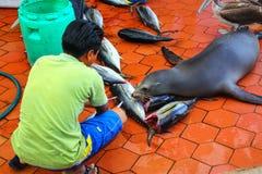 Lokalna mężczyzna rozcięcia ryba przy rynkiem w Puerto Ayora na Santa Cr Obraz Royalty Free