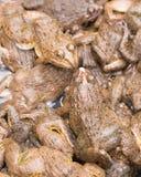Lokalne żaby w Świeżym rynku, Tajlandia Fotografia Stock