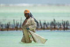 Lokalne kobiety zbiera dennej świrzepy od oceanu indyjskiego Zdjęcia Stock
