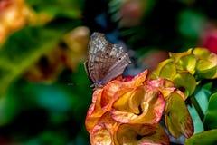 Lokalny motyl w kolorowych otaczaniach fotografia royalty free