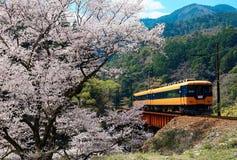 Lokalny pociąg podróżuje na linia kolejowa moście kwitnącym czereśniowego okwitnięcia Sakura drzewem blisko Sasamado stacji zdjęcie stock