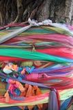 Lokalny sposób Stubarwny atłas Na Bodhi drzewie obrazy stock