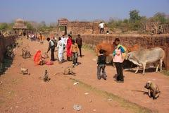 Lokalt folk som går runt om det Ranthambore fortet bland grå langur Arkivbild
