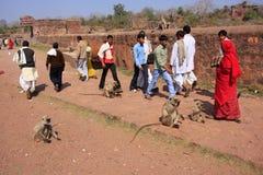 Lokalt folk som går runt om det Ranthambore fortet bland grå langur Arkivfoto