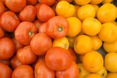 Lokalt fullvuxna tomater royaltyfria foton