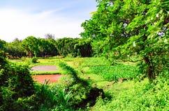 Lokalträdgård i Hawaii arkivbilder