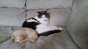 Loki cat and Freya pup dog Royalty Free Stock Image
