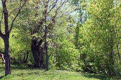 Loking dans les bois Photographie stock