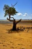 Lokobe Land Stockfotografie