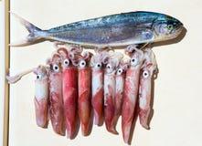 Loligo fresco do calamar vulgar após a captura e o Mahi-Mahi Imagem de Stock