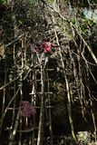 villagers climbing a large rock stone cliff on a makeshift bamboo and tree trunk ladder stock photos