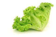 зеленое lollo салата листьев освобождает стоковая фотография rf