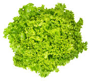 Lollo Bianco lettuce from above on white background. Lollo Bionda, summer crisp variety of Lactuca sativa. Loose-leaf lettuce. Green salad head with frilly Stock Images