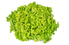 Lollo Bianco lettuce front view on white background. Lollo Bionda, summer crisp variety of Lactuca sativa. Loose-leaf lettuce. Green salad head with frilly Royalty Free Stock Images