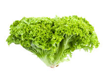 Lollo Bionda Lettuce Royalty Free Stock Photography