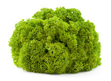 Lollo bionda lettuce Royalty Free Stock Photo