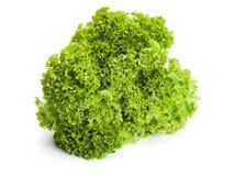 Lollo Bionda Lettuce Isolated Stock Photos
