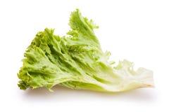 Lollo bionda lettuce Royalty Free Stock Photos