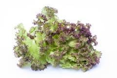 Lollo Rossa, салат изолированный на белой предпосылке Стоковое Изображение RF