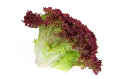 Lollo Rosso. A fresh salad Royalty Free Stock Images