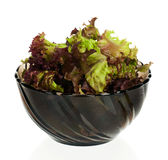 Lollo Rosso lettuce. In the plate isolated on white background royalty free stock photos
