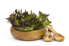 Lollo rosso lettuce in a bowl Stock Photos