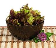 Lollo Rosso lettuce Royalty Free Stock Image