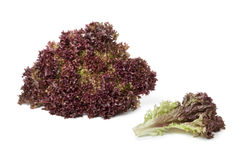Lollo Rosso lettuce and a leaf. On white background Stock Photo