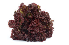Lollo Rosso Lettuce. Perfect Ripe Lollo Rosso Lettuce  on white background Royalty Free Stock Photos