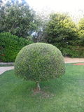 Lollypop buisson Image stock