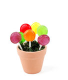 Lollypop Flowers. Colorful lollypops in a flower pot Stock Image