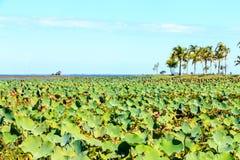 Lolus de feuille à la vue de lagunes Images libres de droits