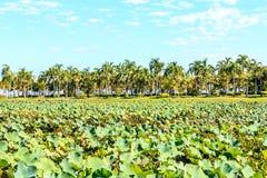Lolus de feuille à la vue de lagunes Photos libres de droits