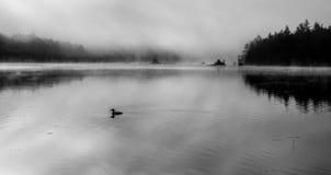 Lom på dimmig sjö - B royaltyfri bild