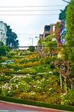 Lombard Straat San Francisco Stock Fotografie