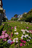 Lombard street, San Francisco. Flowers in Lombard street, San Francisco, California Stock Photography