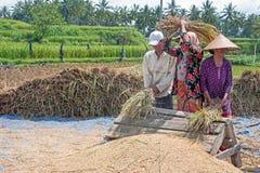 LOMBOK, INDONESIA - 30 DICEMBRE 2016: Lavoratori che raccolgono riso i Fotografia Stock Libera da Diritti