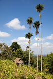 Lombok landscape Royalty Free Stock Image