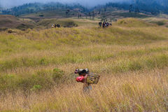 Lombok Porters along the road to the top Royalty Free Stock Photography
