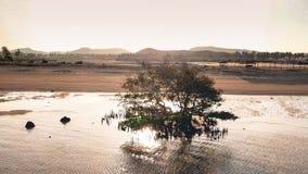 Lombokboom in een magrove! royalty-vrije stock afbeeldingen