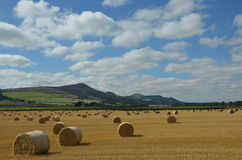 Free Lomond Hills View Royalty Free Stock Image - 44003016