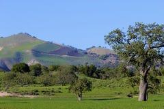 Lompoc la California coltiva le montagne Immagini Stock Libere da Diritti