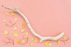 Lona cor-de-rosa com folhas de outono e ramo de árvore seco imagens de stock