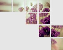 Lona das flores Fotos de Stock